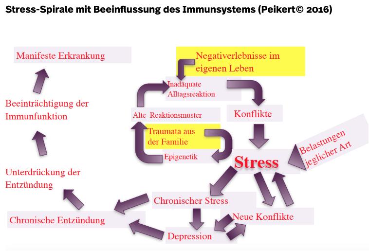 Psychoneuroimmunologie: Wie akuter Stress das Immunsystem schwächt